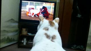 テレビ好き、かな?